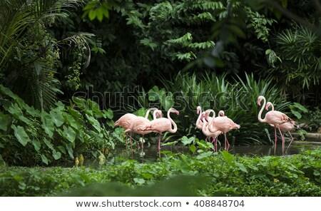 Flamingo étang zoo fleurs eau alimentaire Photo stock © galitskaya