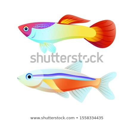 ネオン 魚 色 ポスター 水族館 ストックフォト © robuart