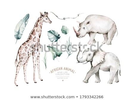Giraffe jungle illustratie bos natuur ontwerp Stockfoto © bluering