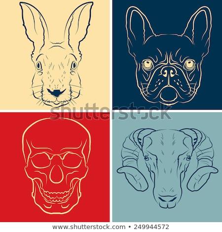 Stockfoto: Schets · frans · schedel · kleur · beret