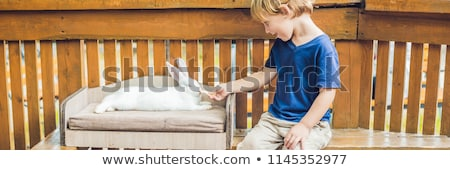 toddler boy caresses and playing with rabbit in the petting zoo concept of sustainability love of stock photo © galitskaya