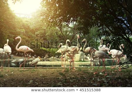 grupo · banco · lagoa · natureza · pássaro · verde - foto stock © boggy