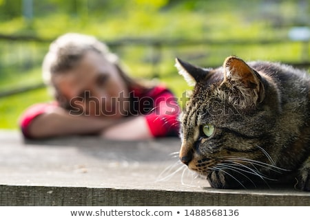 Stock photo: Cute tabby cat lying down in front of girl