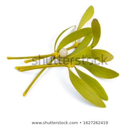 Mistletoe (Viscum album) isolated on white background Stock photo © joannawnuk