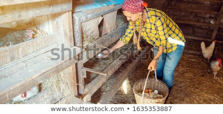 Wide shot of famer woman in the henhouse collecting eggs Stock photo © Kzenon