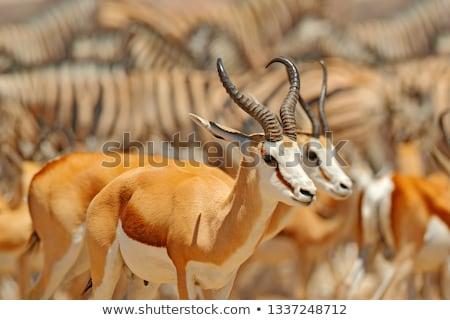 Grup ayakta doğa rezerv Güney Afrika Stok fotoğraf © hedrus