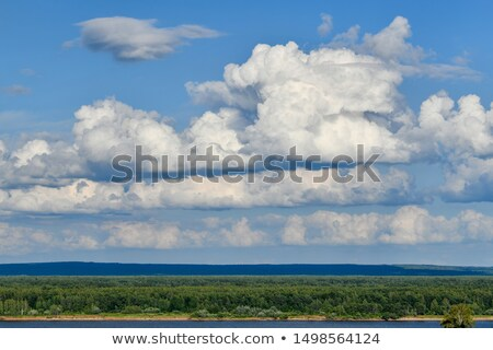 landscape with green juicy leaves and beautiful cumulus clouds stock photo © vlaru