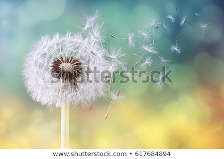 pitypang · kettő · vektor · sziluettek · kék · ég · égbolt - stock fotó © orson