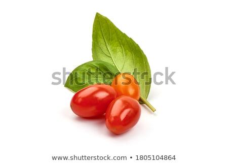 Kerstomaatjes groeiend tuin tak voedsel Rood Stockfoto © elly_l
