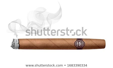Big brown cigar with ash and smoke Stock photo © Olesha
