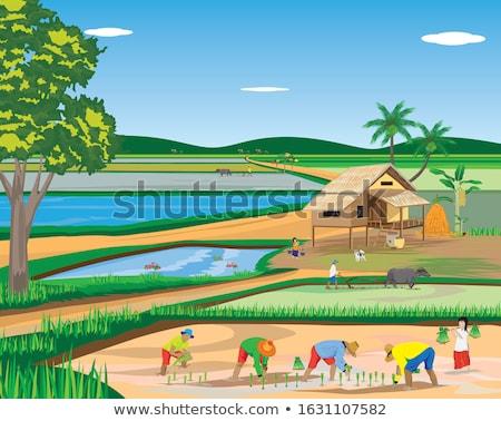 Agrícola campo casa pequeño campo de trigo cielo azul Foto stock © stevanovicigor
