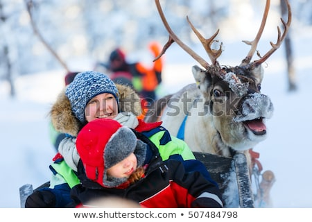 reindeer from north of Finland Stock photo © RuslanOmega