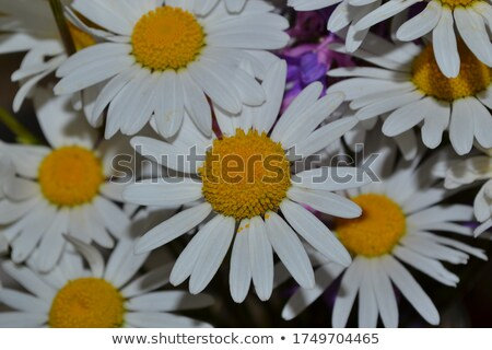 Сток-фото: мало · Daisy · большой · небольшой · закрыто