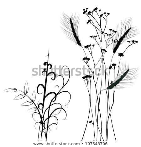 トウモロコシ ツタ カバー 農民 フィールド ストックフォト © rhamm