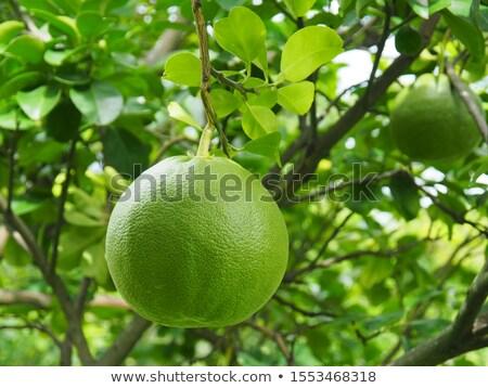 pomelo fruit Stock photo © tungphoto