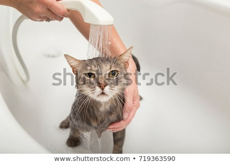 girl and cat in shower stock photo © petrmalyshev