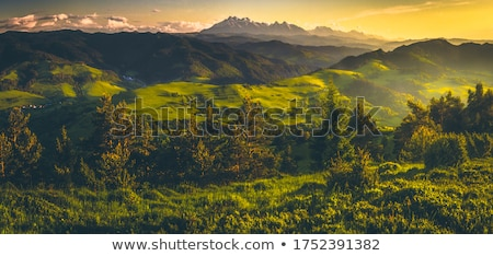 view at tatra mountains poland stock photo © neonshot
