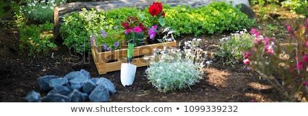 растений ежегодный прямой теплица питомник изолированный Сток-фото © songbird