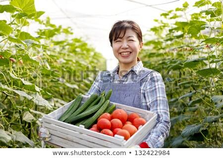 Gospodarstwa pracownika szklarnia pomidorów roślin działalności Zdjęcia stock © HighwayStarz