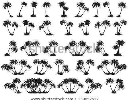 feketefehér · pálmafa · sziluett · fa · nap · pálma - stock fotó © kiddaikiddee