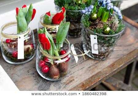 Tulipe balle paysage art horizons Photo stock © animagistr