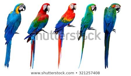 Azul amarillo jaula naturaleza aves verde Foto stock © Witthaya