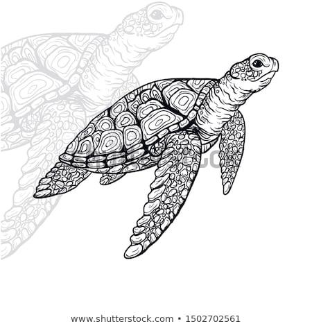декоративный Черепахи морем волны аннотация Сток-фото © ulyankin