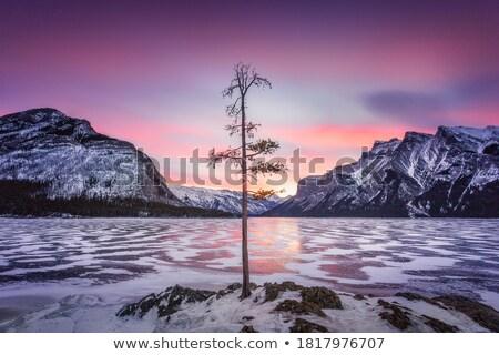 madrugada · pitoresco · lago · céu · árvore · grama - foto stock © ca2hill
