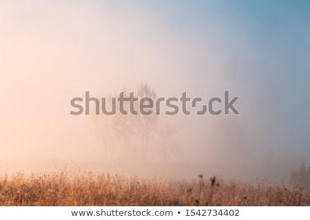 rano · mgły · pola · samochodu · drogowego · tle - zdjęcia stock © bbbar