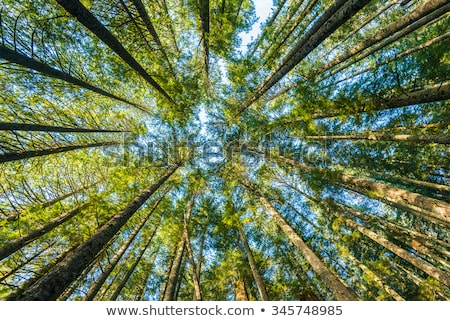 A view of the tall mountain Stock photo © bluering