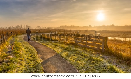 Foggy dutch landscape with a path Stock photo © michaklootwijk