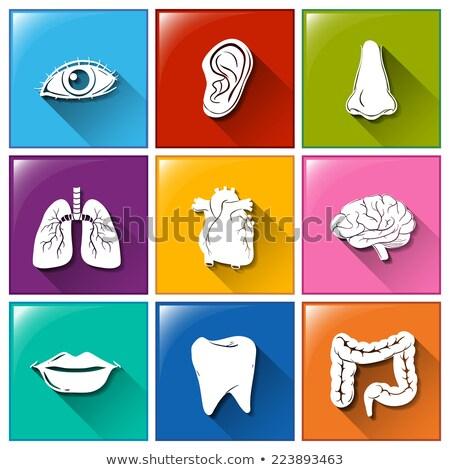 intestinos · ícone · branco · médico · saúde · pintura - foto stock © bluering