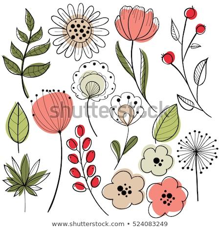 kézzel · rajzolt · növénytan · szett · virágok · levelek · vektor - stock fotó © frescomovie