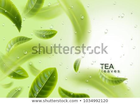 Té verde fondo aumentó flor espacio de la copia superior Foto stock © Melnyk