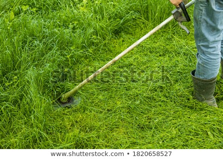 Closeup shot of the gardener cutting grass with lawn mower. Stock photo © Nobilior