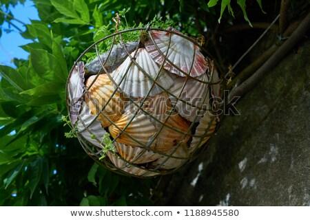 Frazione mare conchiglie basket galizia Spagna Foto d'archivio © lunamarina