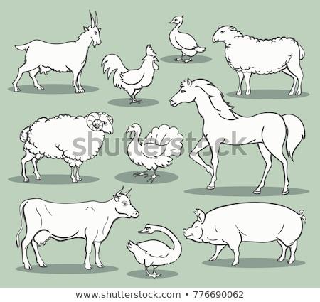Animal outline for sheep Stock photo © colematt