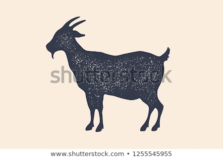 goat vintage logo retro print poster for butchery stock photo © foxysgraphic