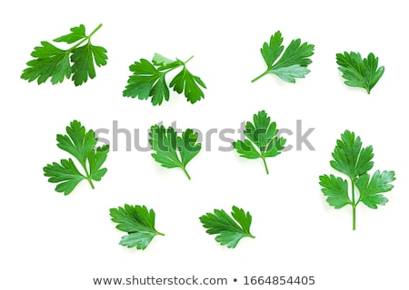 Bunch of Cilantro, paths Stock photo © maxsol7