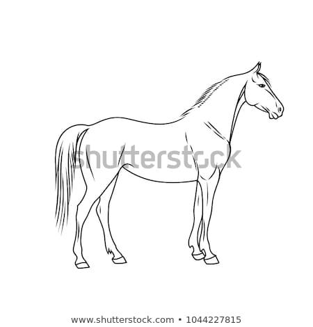 Tier Gliederung Pferd Illustration Natur Hintergrund Stock foto © colematt