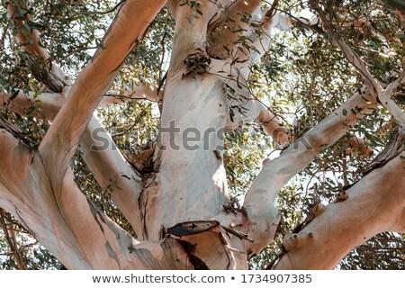 pormenor · nó · velho · ramo - foto stock © bobkeenan