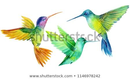 Vogel Paradies Garten Illustration Blume Natur Stock foto © colematt