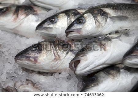 группа · небольшой · рыбы · морем · подводного · мнение - Сток-фото © vapi