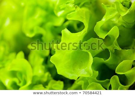 マクロ 新鮮な レタス コピースペース 健康食 ストックフォト © lichtmeister