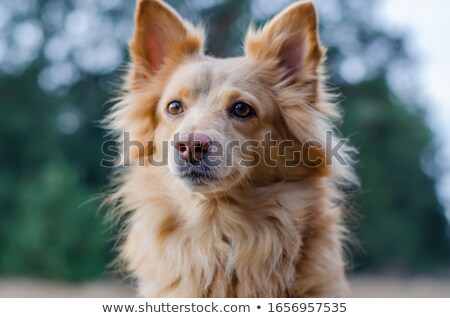 Ritratto adorabile mista razza cucciolo Foto d'archivio © vauvau