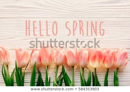 привет весны весенние цветы птица солнце вектора Сток-фото © barsrsind