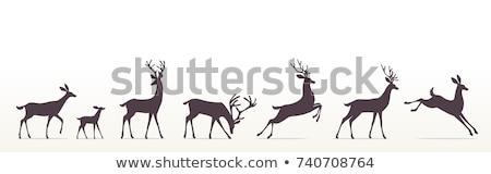 Estilizado ciervos ilustrado lienzo como hoja Foto stock © lirch