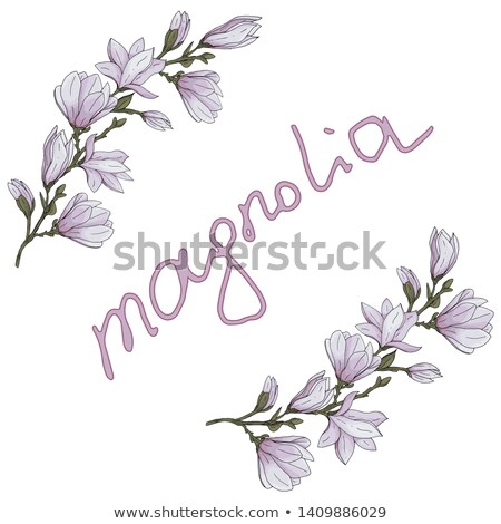 Racemes to magnolias Stock photo © RuslanOmega