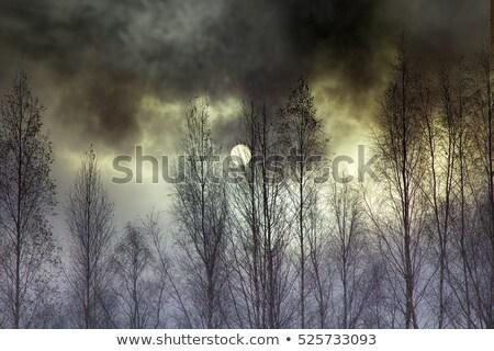 daha · fazla · yüksek · hırs · beklentiler · Yıldız · 3d · illustration - stok fotoğraf © spectral