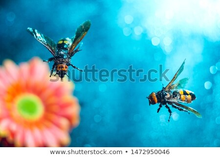 Biene · Gänseblümchen · Blume · Arbeit · Hintergrund - stock foto © dsmsoft